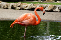 FlamingoGardens-DSC06348-web1600