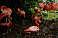 FlamingoGardens-DSC06378-web1600