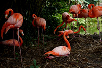 FlamingoGardens-DSC06379-web1600
