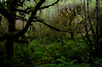 TenebrousForest-IMG_0171.jpg