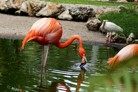 FlamingoGardens-DSC06353-web1600