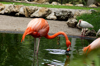 FlamingoGardens-DSC06352-web1600