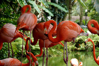 FlamingoGardens-DSC06370-web1600