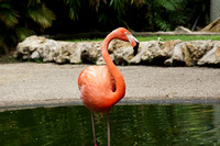 FlamingoGardens-DSC06344-web1600